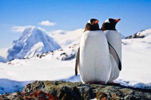 Cruise-Expeditie-naar-Antarctica-Zuidpool6