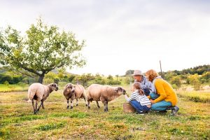 Boerenbed-kortingscode-70-euro