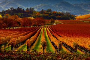 Goedkope wijnreizen in Europa4