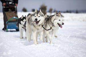 Goedkope-Noorderlicht-reis-naar-Lapland-inclusief-excursies-met-TUI-1