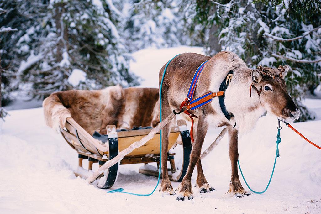 Goedkope-Noorderlicht-reis-naar-Lapland-inclusief-excursies-met-TUI-2