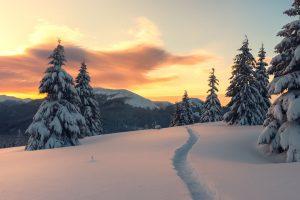 Goedkope-Noorderlicht-reis-naar-Lapland-inclusief-excursies-met-TUI-5
