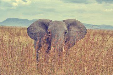 Goedkope-safari-Afrika13