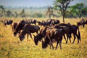 Goedkope-safari-Afrika4