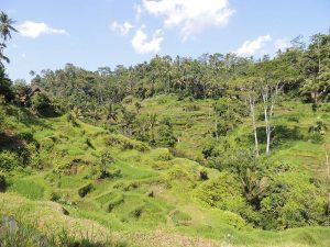 Mini reisgids en reistips Bali Indonesie Rijstvelden