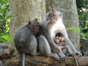 Mini reisgids en reistips Bali Indonesie Ubud Monkey Forest